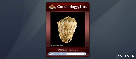 conchology widget